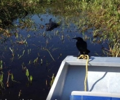 florida everglades boat tours