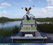 airboat in everglades miami, fl